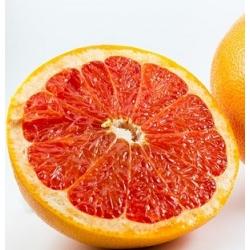 Greipfrutų sėklų ekstraktas 75%, 10ml