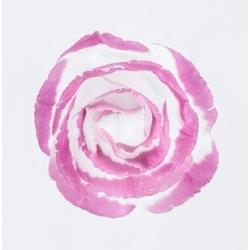 Damaskinių rožių hidrolatas, 100ml/200ml