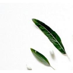Arbatmedžio eterinis aliejus, 10ml/50ml
