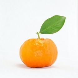 Mandarinų eterinis aliejus, 10ml/50ml